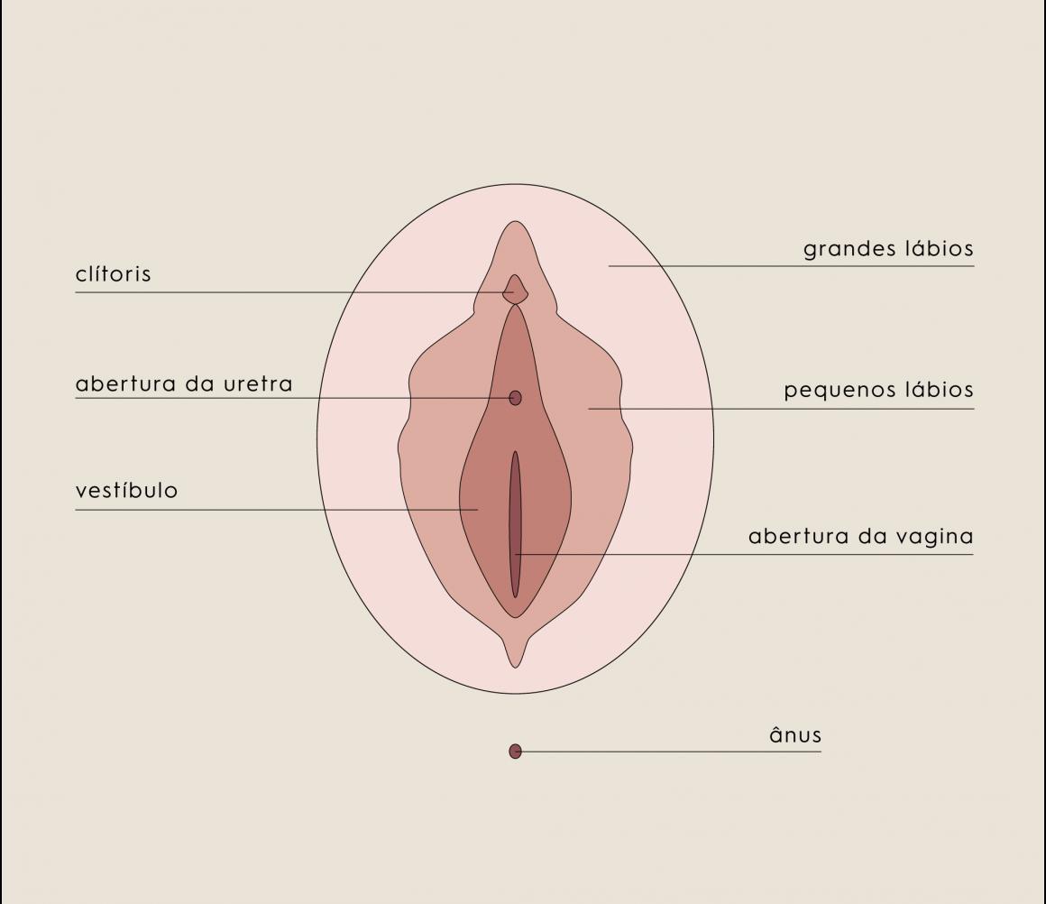 Vulva feminina